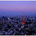 東京タワー2011_012