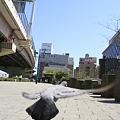 Photos: ハト