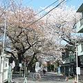 染井霊園入口