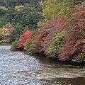 Photos: 紅葉の池畔