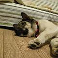 Photos: 449うーたん 011-1