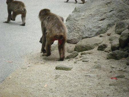 死んだ赤ちゃんを持ち歩くお母さん (2)