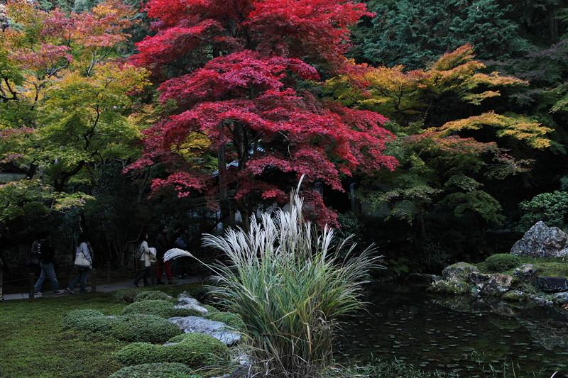IMG_0001京都の紅葉_2010年11月