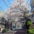 Photos: 日常桜5_昼