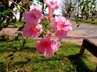 カルロス・キーン(春の訪れ)