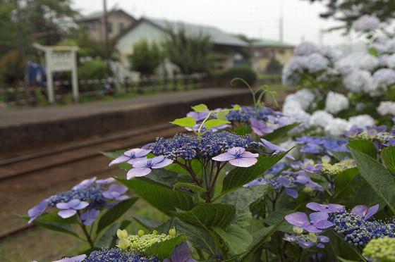 写真: 小湊鉄道 10