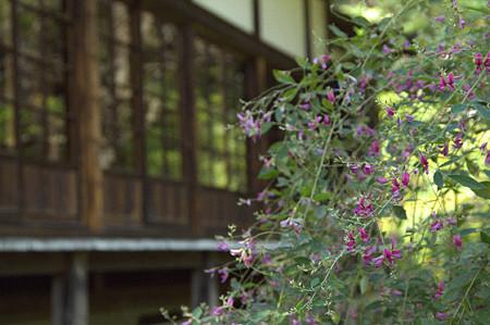 秋の鎌倉 14