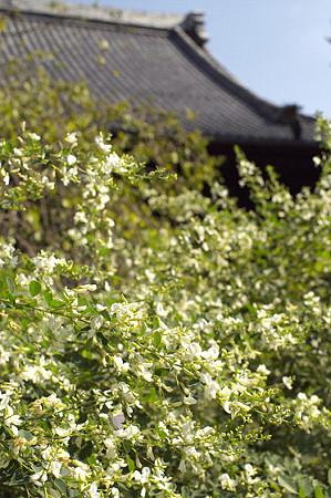 秋の鎌倉 27