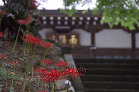 阿夫利神社から日向薬師へ 17