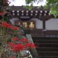写真: 阿夫利神社から日向薬師へ 17