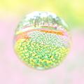 Photos: 花玉 -Pastel Color-
