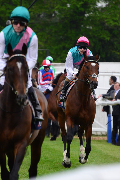 06.Frankel led by his brother -Lockinge Stakes-
