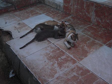 シャルム・ッシェーフの猫の親子