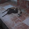 Photos: シャルム・ッシェーフの猫の親子